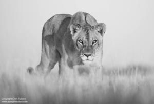 The Central Kalahari Game Reserve